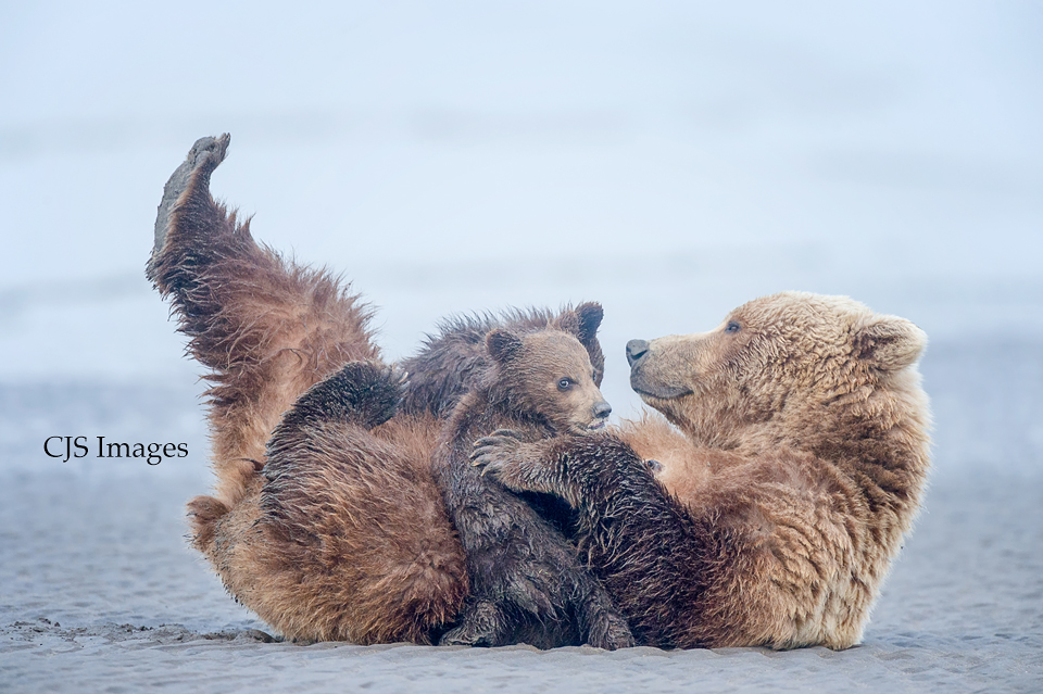 Nursing-Bears.jpg