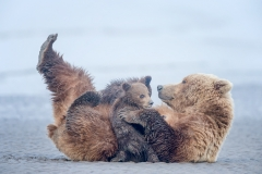 NURSING BEAR