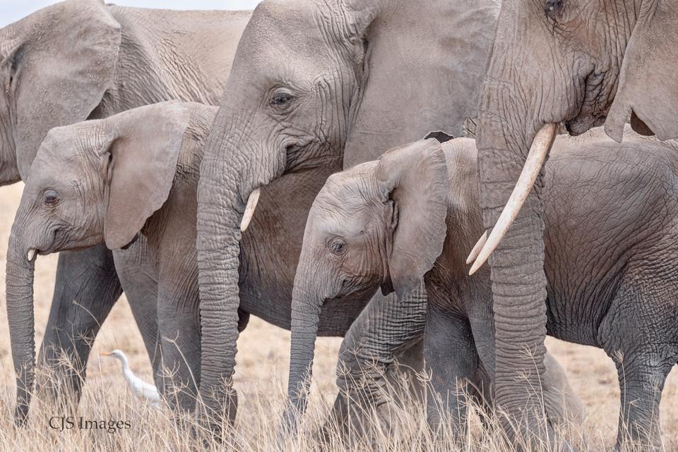 Elephants In Passing