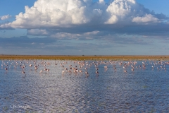 Lake at Amboseli