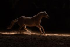 Rim Light