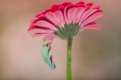 HANGING BY A PETAL